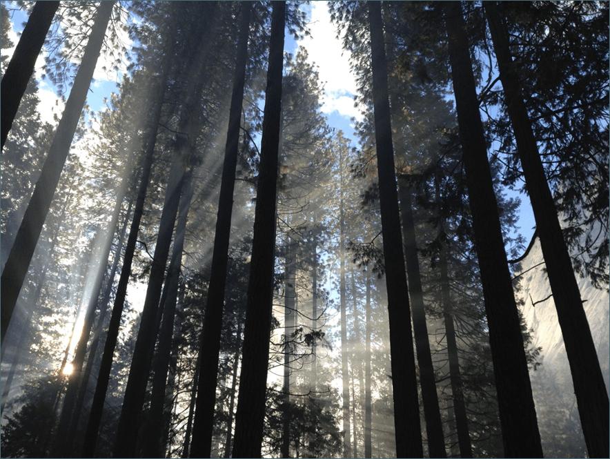Harmonytrees1